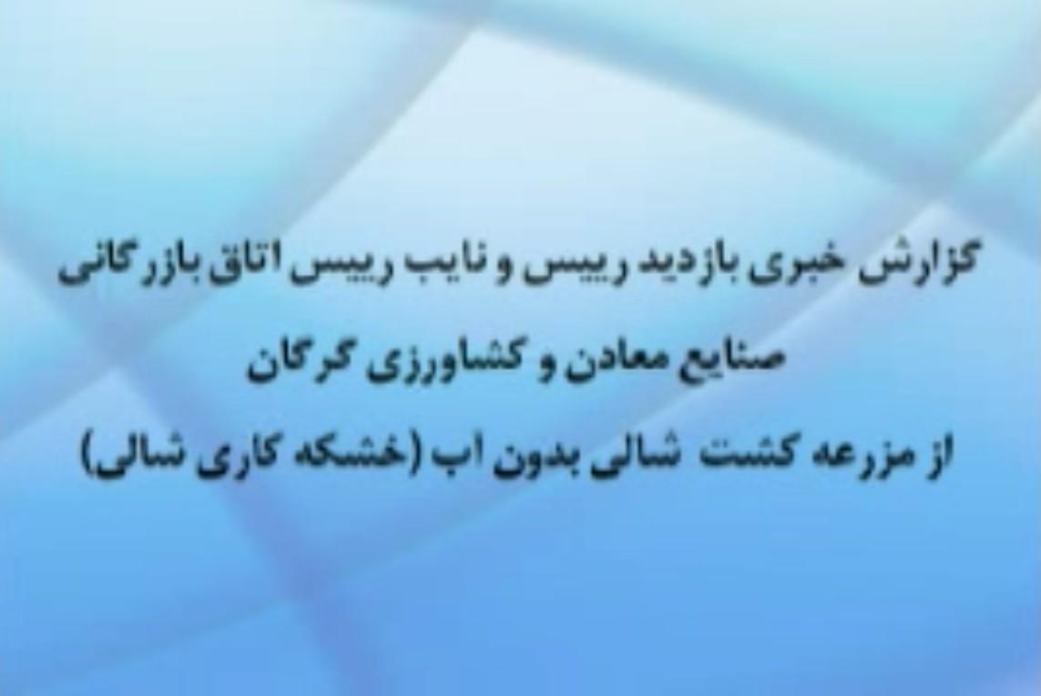 بازدید رئیس و نایب رئیس اتاق بازرگانی گرگان از خشکه کاری شالی در استان گلستان